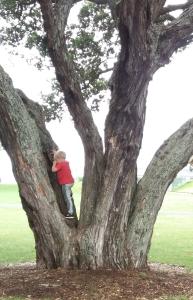 boy n tree