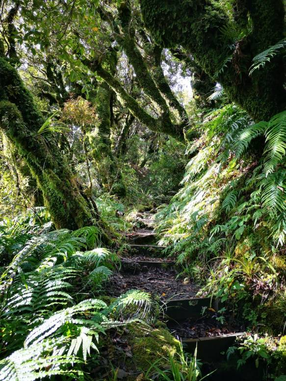 Taranaki path
